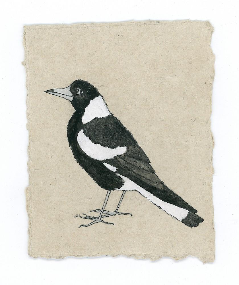 Aleta Lederwasch Illustrators Australia